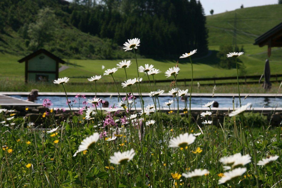 Was will man mehr? die wärmende Frühlingssonne, Baden im Außenpool, blühende Wiesen