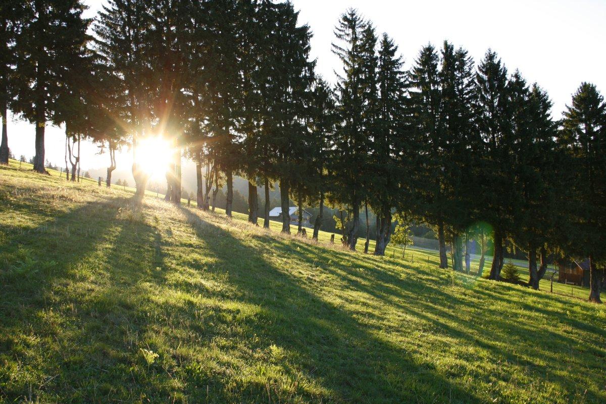 Die waagrechten Sonnenstrahlen der Morgensonne bilden lange Schatten