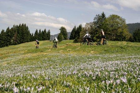 Frühling und Krokusblüte
