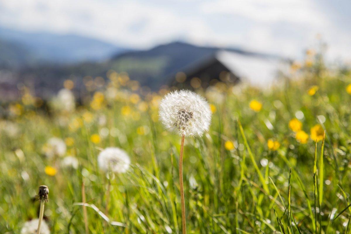 Alpenresort Frühling
