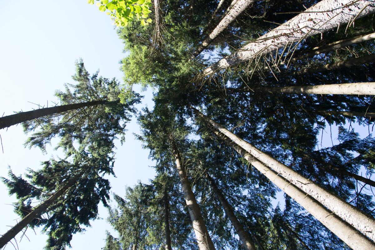 Blick von der Waldhängematte