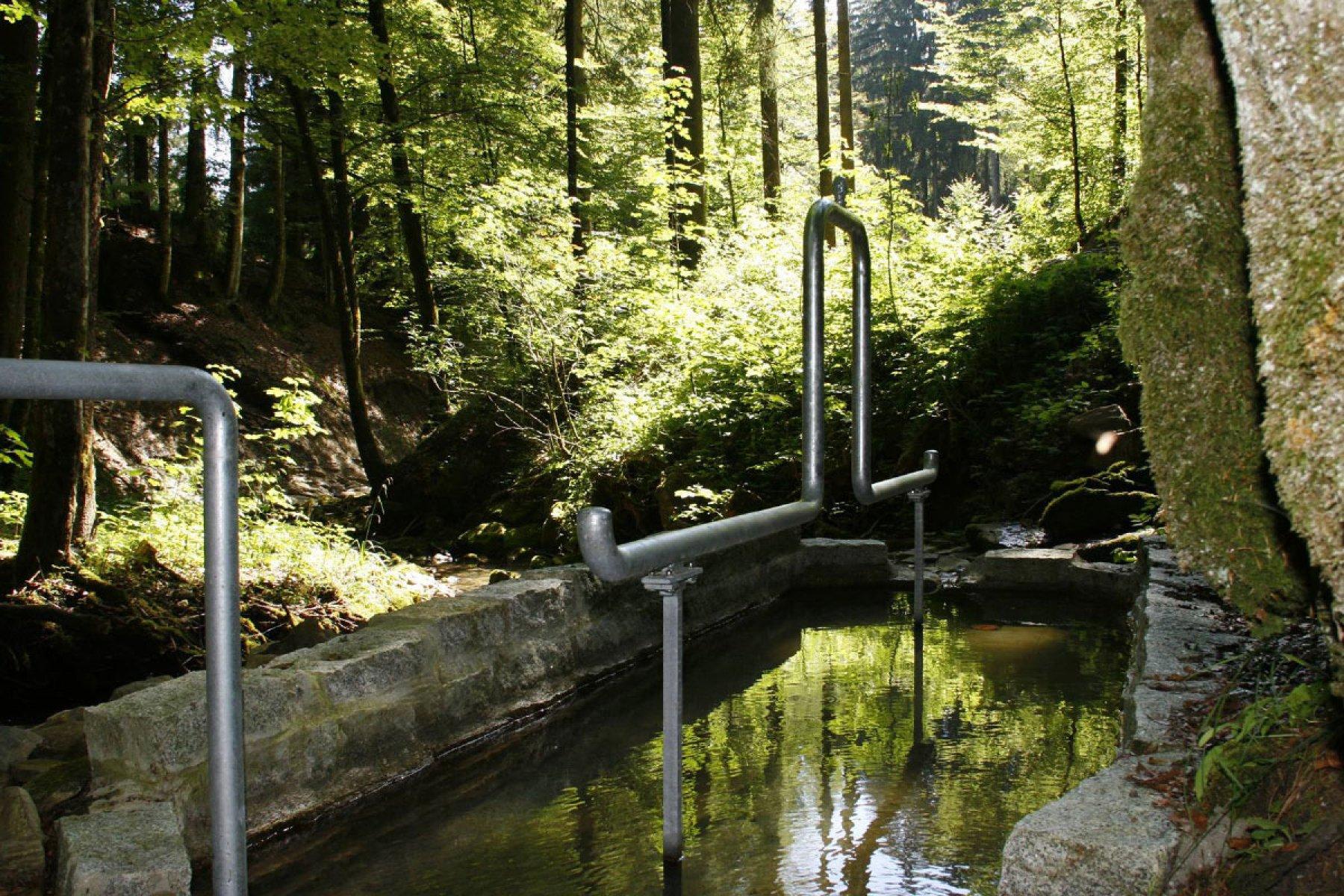 Wassertretstelle am Klimapfad