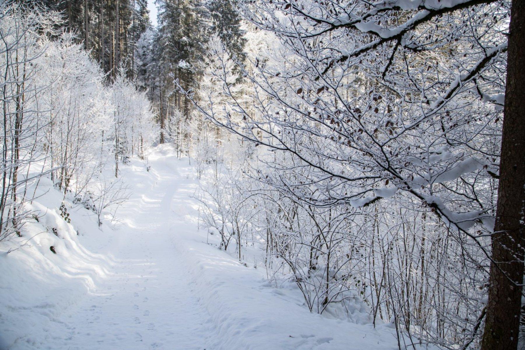 Winter auf dem Klimapfad