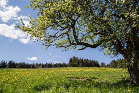Unterm Apfelbaum