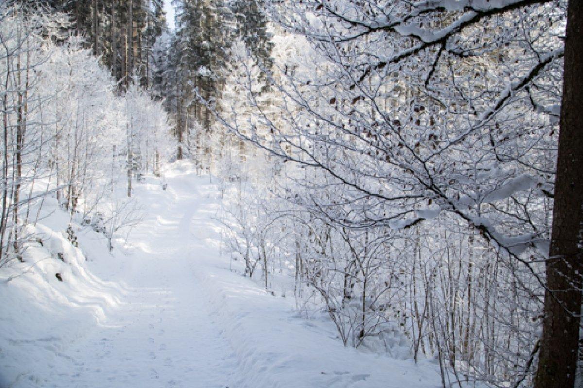 Waldbaden im Winter