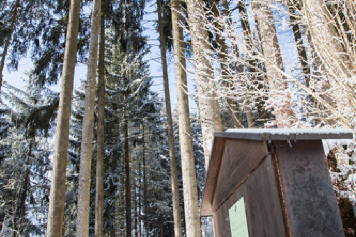 Unsere Waldhängematten am Klimapfad