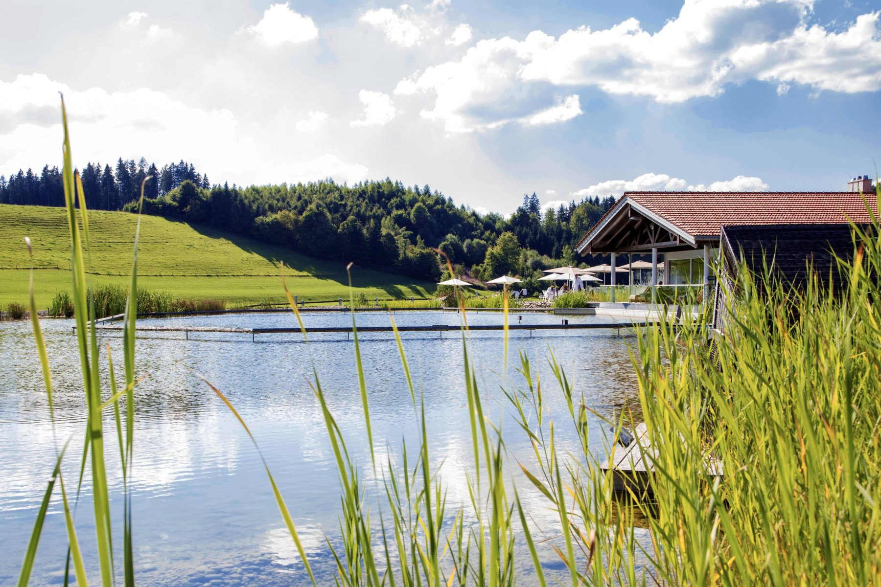 Sommer am Natursee