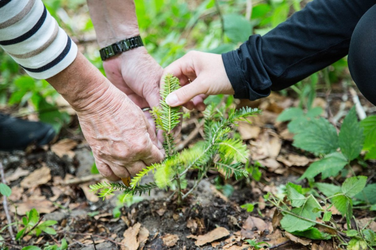 Baumpflanzaktion in Haubers Wald