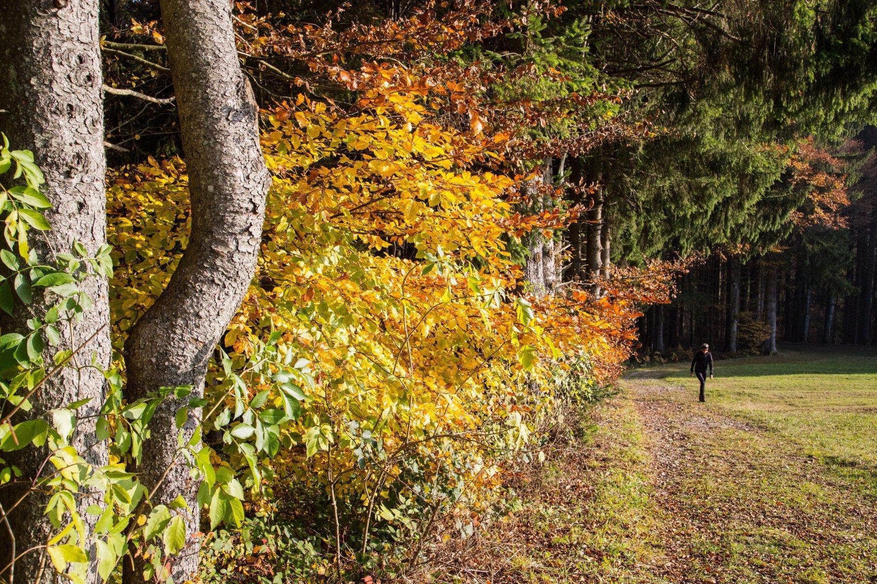 Im Oktober leuchtet Haubers Wald in allen Herbstfarben.
