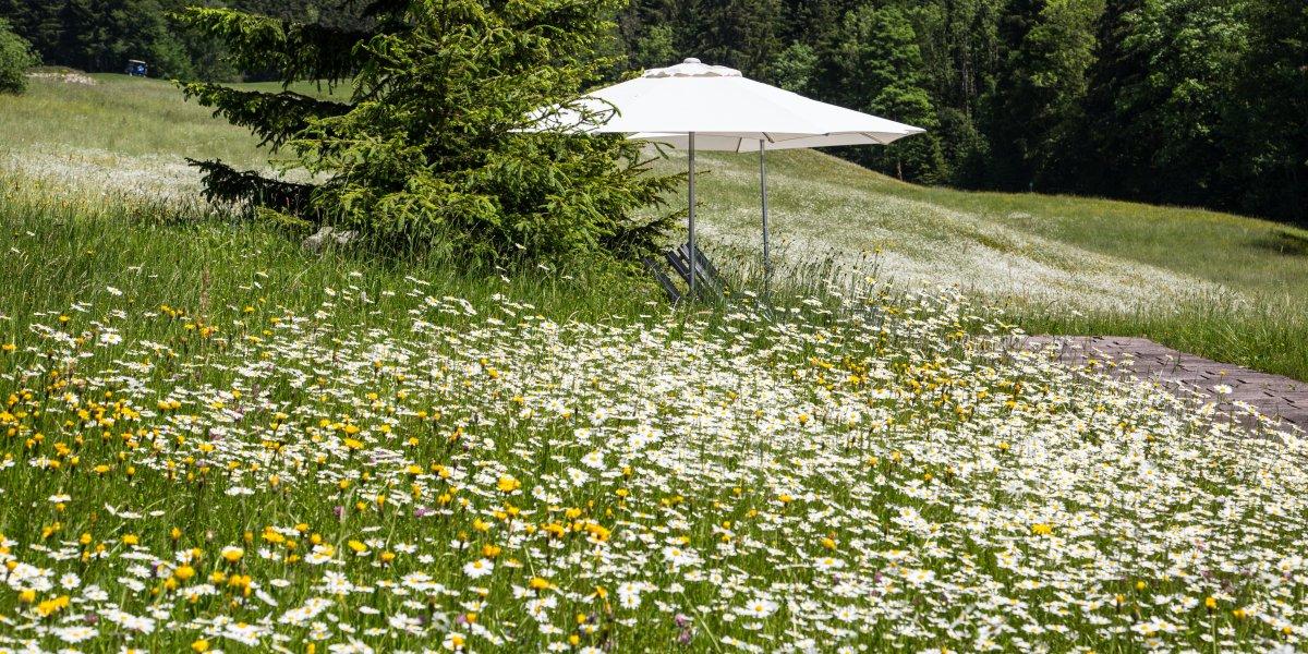 Liegen im Blumenmeer