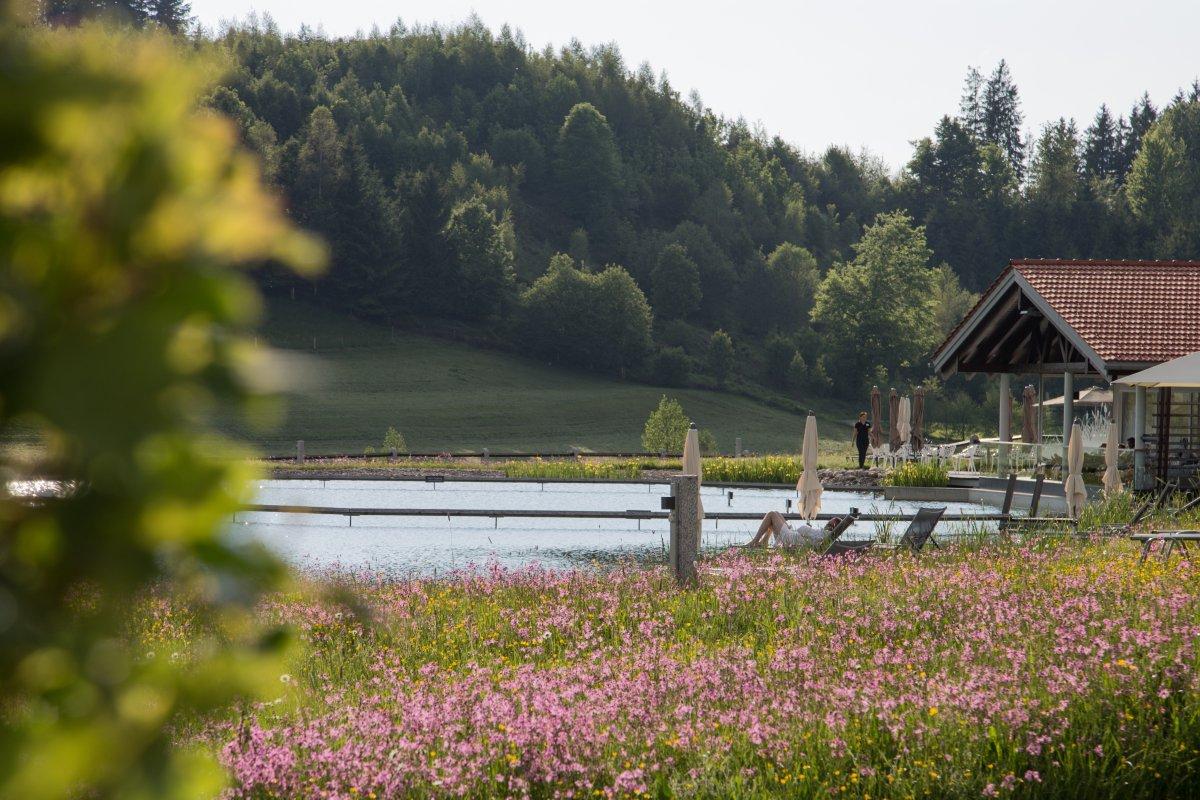 Natursee im Frühling