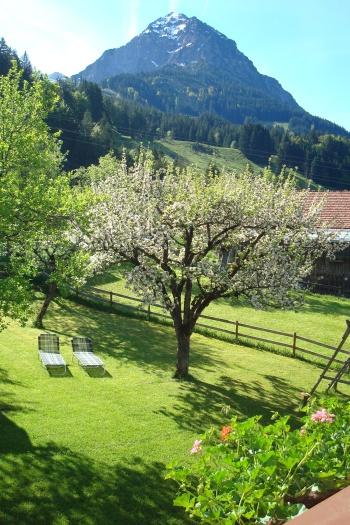 Ausblick vom Balkon mit Blick in Garten