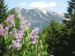 Ausblick vom Haus zum Nebelhorn