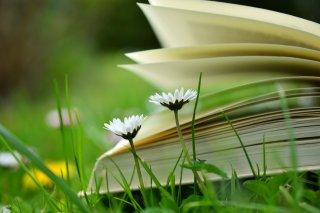Alpenbibliothek mit Romanen und Bergliteratur