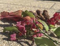 Naturwerkstatt Herbstliche Tischdeko (4) 1