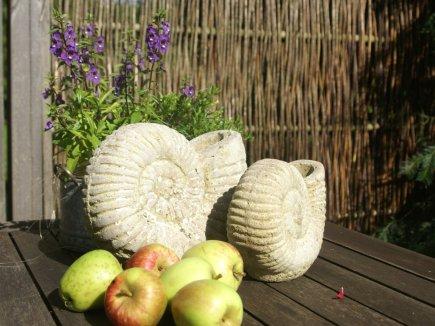 Schnecke und Äpfel