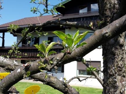 Haus mit Apfelbaum
