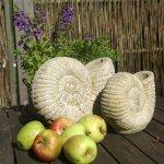 Äpfel aus dem Garten