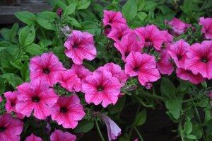 Blumenschmuck im Garten