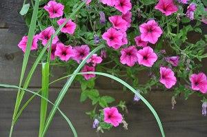 Farbenfroher Blumenschmuck