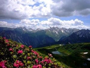 Alpenrosenblüte mit Blick zum Schlappold
