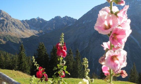 Blumenpracht auf der Alpe Kuhgehren