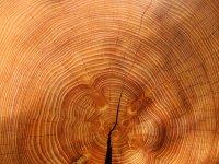 Wood-3212803