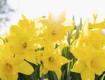 Allen neu macht der Frühling