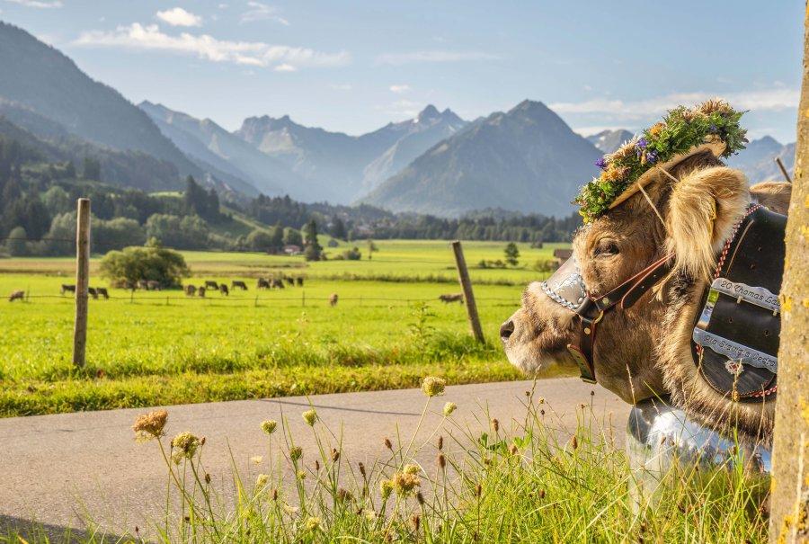 Viehscheid Rückblick