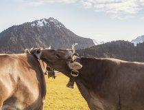 14.10. Wiesen Kühe und Rehe-006