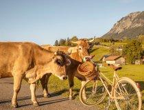 14.10. Wiesen Kühe und Rehe-012