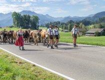 Viehscheid Schöllang