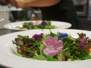 Wildkräuter vereint zu einem Salat