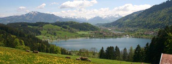 Frühlingswiesen oberhalb vom Großen Alpsee bei Immenstadt