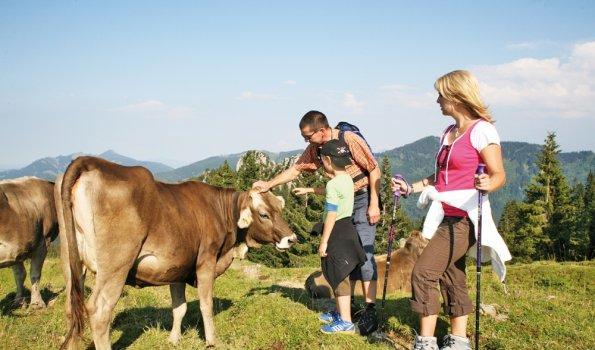 Wanderungen für die ganze Familie in der Ferienregion Alpsee-Grünten