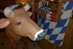 Kuh und Flagge - typisch bayrisch!