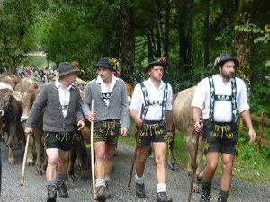 Die Hirten begleiten das Vieh ins Tal