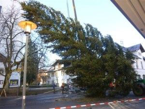 Die Aufstellung des Oberstdorfer Christbaums