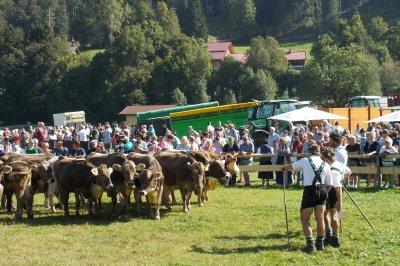 Die Kühe werden wieder übergeben