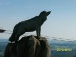 Wolf in den Bergen