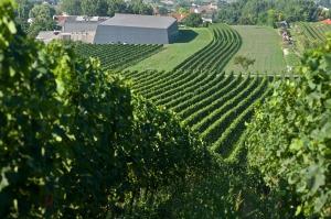 Weingut Heinrich, Gols, Neusiedlersee