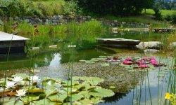Wasserpflanzen säumen das Ufer