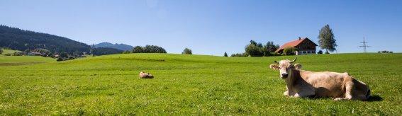 Sommer im Allgäu