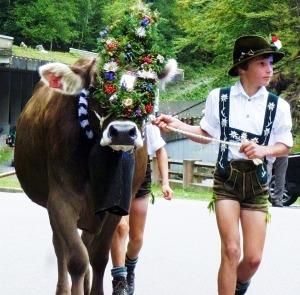 Kranzrind zum Viehscheid