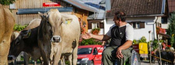 Mit Allgäuer Kühen auf Tuchfühlung