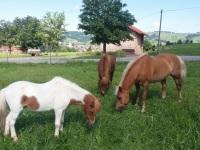 Urlaub mit Pony und Pferde