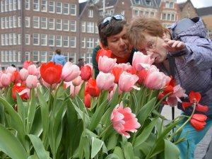 Holland für Behinderte