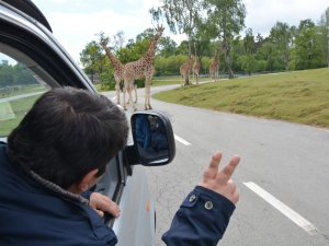 Safari trotz Handicap