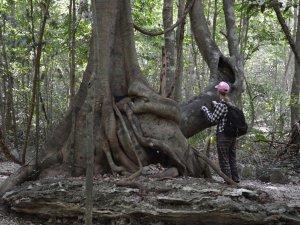 Dschungel mit Behinderten
