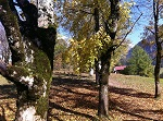 Hofmannsruhe im Herbst
